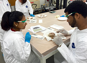 Dissection module within the Summer Biomedical Engineering Workshop
