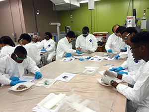 Dissection module within the Summer Biomedical Engineering Workshop2